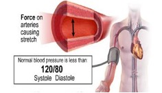 Graphic shows arm with blood pressure cuff on it. Enlarged image shows inside of blood vessel with arrows showing direction of pressure on blood vessel walls.